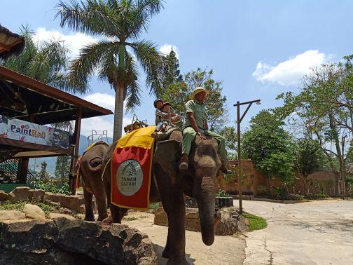 royal safari 26