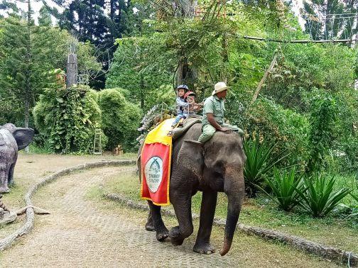 royal safari 27